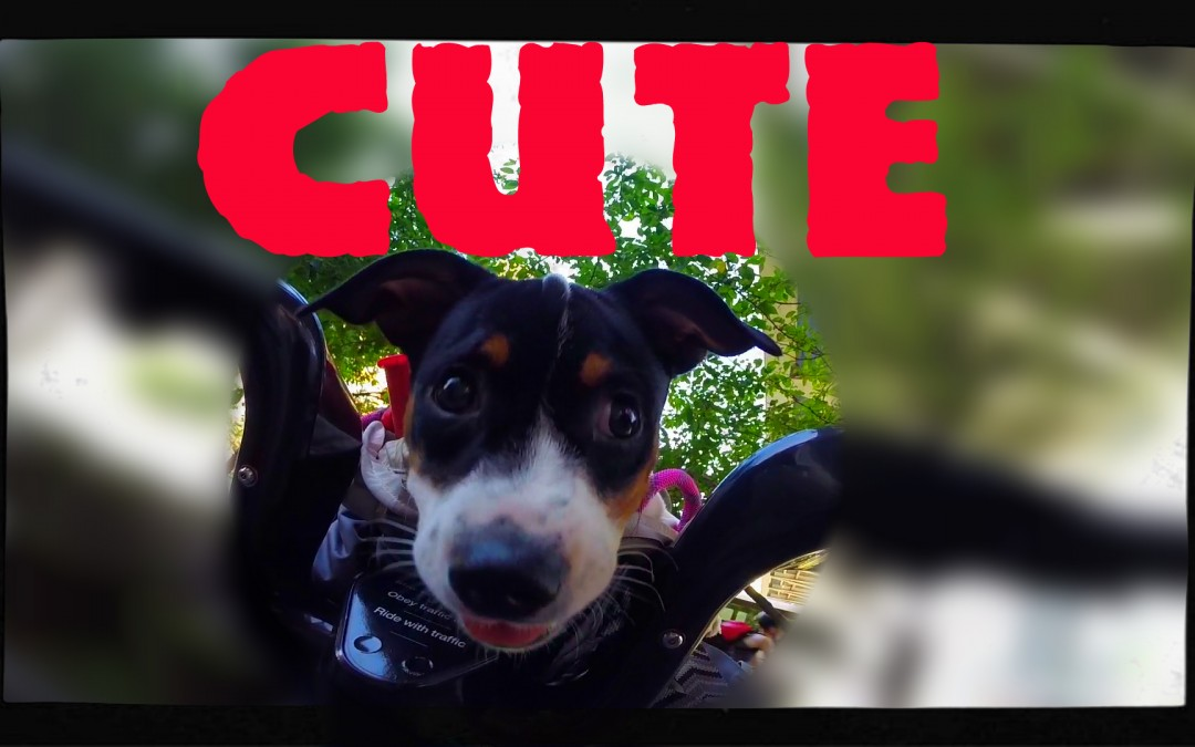 Meet with The Cutest Member of CitiBike